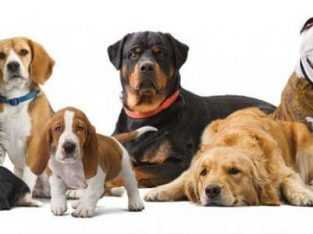 All species of Dogs for sale